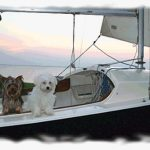 One of our Teacup Yorkies & Maltese puppies enjoying some time on the water